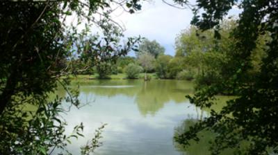 Willow Lake 3