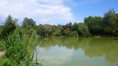 Willow Lake 2