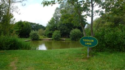 Tiddler Pond